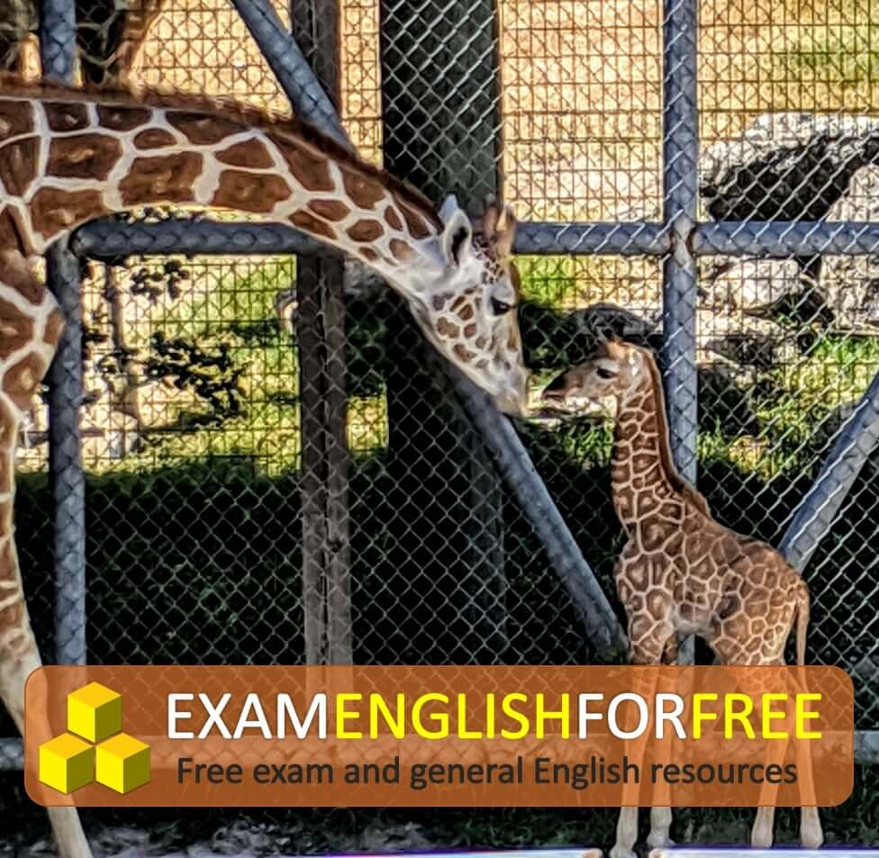 IELTS Task 2 model answer 9 - Zoos should be closed